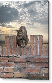 Guarding Orvieto Acrylic Print by Lynn Andrews