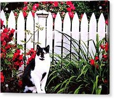 Guarding The Rose Garden Acrylic Print by Angela Davies