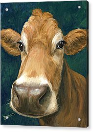 Guernsey Cow On Teal Acrylic Print by Dottie Dracos
