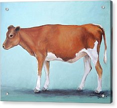 Guernsey Cow Standing Light Teal Background Acrylic Print
