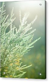 Guided By The Light Acrylic Print