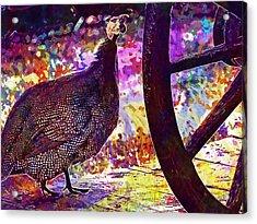 Guinea Fowl Guinea Fowl Chicken  Acrylic Print