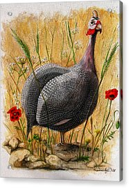 Guinea Fowl With Poppies Acrylic Print by Yvonne Ayoub