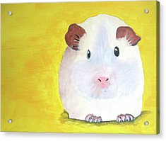 Guinee Pig Acrylic Print by Darren Stein