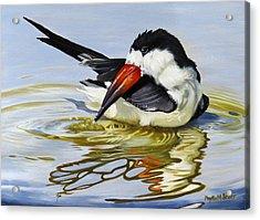 Gulf Coast Black Skimmer Acrylic Print
