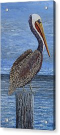 Gulf Coast Brown Pelican Acrylic Print by Suzanne Theis