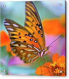 Gulf Fliterary Butterfly Acrylic Print by Joel Olives Photography