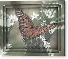 Gulf Fritillary Behind The Screen Acrylic Print by Dottie Dees