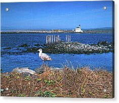 Gull And Lighthouse Acrylic Print by Jim Nelson