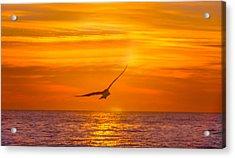 Gull At Sunrise Acrylic Print by Allan Levin