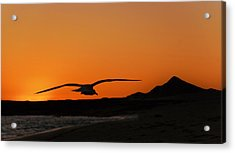 Gull At Sunset Acrylic Print by Dave Dilli