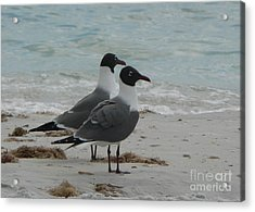 Gull Friends Acrylic Print by Elizabeth Fontaine-Barr