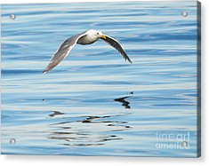 Gull Mirrored Acrylic Print