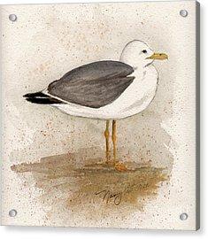 Gull Acrylic Print by Nancy Patterson