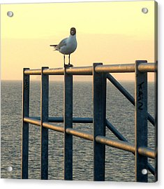 Gull On A Rail Acrylic Print by Michael Canning