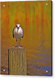 Gull On Post Acrylic Print by Michael Peychich