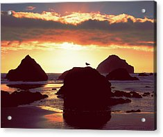 Gull On Rock Bandon Beach Sunset Acrylic Print by Jim Nelson
