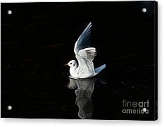 Gull On The Water Acrylic Print by Michal Boubin