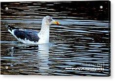 Gull On Winter's Pond  Acrylic Print