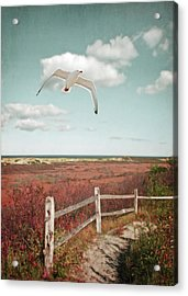Gull Over Provincelands Trail, Cape Cod Acrylic Print by Brooke T Ryan