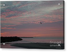 Gull Sunset Acrylic Print by Tannis Baldwin