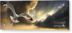 Gull With Approaching Storm Acrylic Print