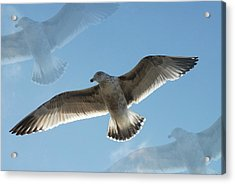 Gulls 41 Acrylic Print by Joyce StJames