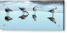 Gulls Drinking Party Acrylic Print