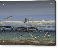 Gulls Flying By The Bridge At The Straits Of Mackinac Acrylic Print