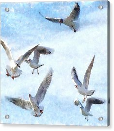 Gulls In Flight Watercolor Acrylic Print