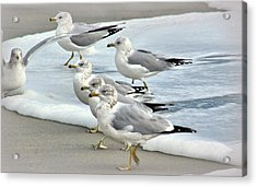 Gulls In The Surf Acrylic Print