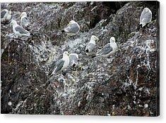 Gulls On An Island Acrylic Print