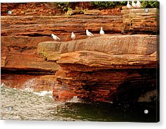 Gulls On Outcropping Acrylic Print
