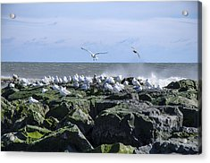 Gulls On Rock Jetty Acrylic Print