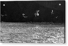 Gulls On The River Acrylic Print