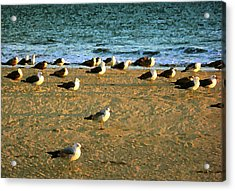 Acrylic Print featuring the digital art Gulls by Timothy Bulone