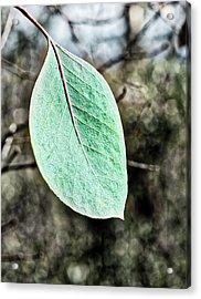 Gum Leaf - Australia  Acrylic Print by Steven Ralser