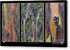 Gum Trees At Lake St Clair Acrylic Print by Werner Padarin
