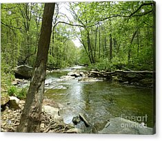 Acrylic Print featuring the photograph Gunpowder Falls - Ncr Trail by Donald C Morgan