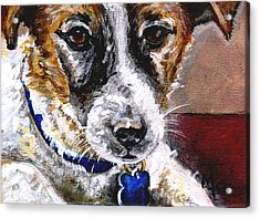 Gunter From Muttville Acrylic Print by Mary-Lee Sanders