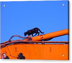 Gunther Gets On Top Of Things Acrylic Print by Anita Dale Livaditis