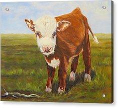 Gus, Cow Acrylic Print