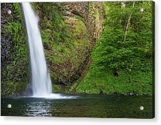 Gushing Horsetail Falls Acrylic Print by Greg Nyquist