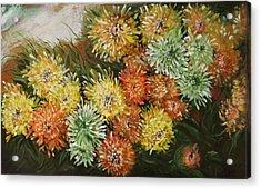 Gusty Chrysanthemums Acrylic Print
