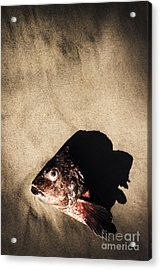 Gutted Acrylic Print by Jorgo Photography - Wall Art Gallery