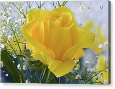 Acrylic Print featuring the photograph Gypsophila And The Rose. by Terence Davis