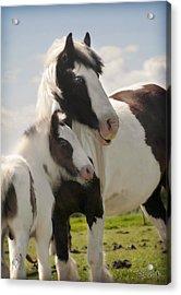 Gypsy Mare And Foal Acrylic Print by Elizabeth Vieira