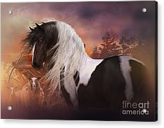 Gypsy On The Farm Acrylic Print by Shanina Conway