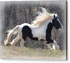 Gypsy Stallion Esperanzo Acrylic Print by Terry Kirkland Cook