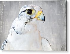 Gyrfalcon Acrylic Print by Debi Bishop